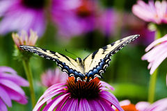 The world is open. A butterfly free to decide where to go Stock Photography