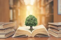 Free World Philosophy Day Concept With Tree Of Knowledge Planting On Opening Old Big Book In Library Full With Textbook, Stack Piles Royalty Free Stock Photography - 186098027