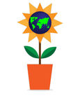 World in the pot. World flower is in the pot Royalty Free Stock Image
