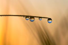 World reflection in dew drops Stock Images