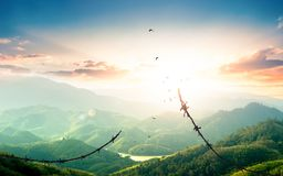World Refugee Day concept: Free bird flying over broken barbed wire stock images