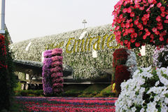 The world`s biggest natural flower garden. Structure forming the shape of the Airbus A380. DUBAI UAE - DECEMBER 8 2017: Dubai Miracle Garden: The world`s royalty free stock photos