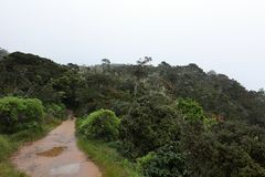 World`s End in the Horton Plains National Park in Sri Lanka. The World`s End in the Horton Plains National Park in Sri Lanka Royalty Free Stock Images