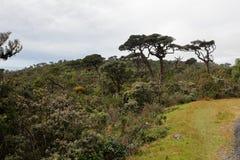 World`s End in the Horton Plains National Park in Sri Lanka. The World`s End in the Horton Plains National Park in Sri Lanka Royalty Free Stock Image