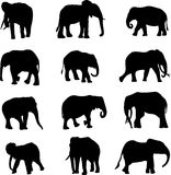 The world's three kinds of elephants Stock Photo