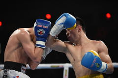 World series of boxing: Ukraine Otamans vs Russian Boxing Team Stock Images