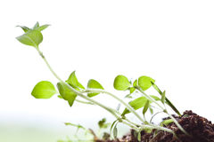 World of small plant Royalty Free Stock Photo