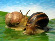 World of snails. Two snails on a meadow Stock Image