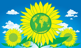 World Sun Flower Stock Photography