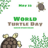 World Turtle Day, May 23 Royalty Free Stock Image