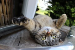 The world upside down. My playful cat Stock Photography