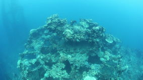 World War II Shipwreck in Palau stock video