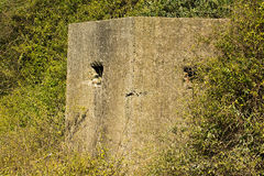 World war two pill box. Old ruin of a an allied world war two bunker in the uk commonly called a pillbox Stock Photo