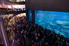 Worlds Largest shopping mall. Crowd at the New Dubai mall Aquarium Stock Images