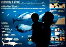 Worls der Haifische Stockfoto