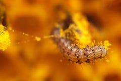 worm Fotografie Stock Libere da Diritti