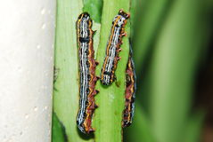 worm photos stock
