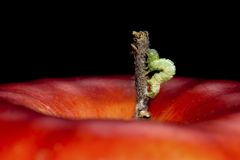 Worm on Apple stock photography