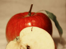Worm on the apple. Posing royalty free stock image