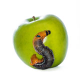 Worm & Apple Stock Photography