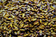 Worm as snack in Asia countries. Food street market Royalty Free Stock Photos
