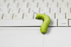 Worm bug on computer Royalty Free Stock Image