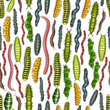Worm and caterpillar insects seamless pattern Stock Images