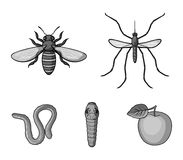 Worm, centipede, wasp, bee, hornet .Insects set collection icons in monochrome style vector symbol stock illustration.  Royalty Free Stock Photography