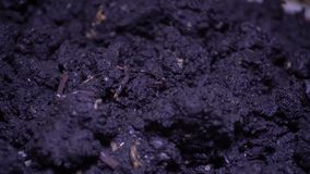 Worm in donkere grond stock footage
