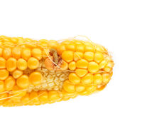 Worm eating the corn Royalty Free Stock Image
