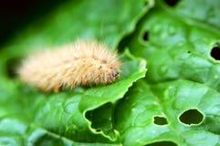 Worm en las hojas vegetales Imágenes de archivo libres de regalías