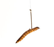 Worm on fish bait hook Stock Image