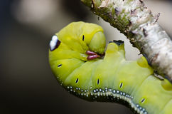 Worm in green nature Stock Photo