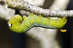 Worm in green nature Stock Photos