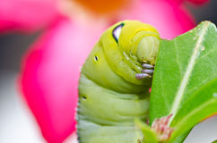 Worm in green nature Royalty Free Stock Image