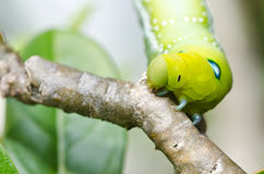 Worm in green nature Stock Image