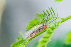 Worm in green nature Royalty Free Stock Photos