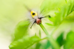 Worm in green nature Royalty Free Stock Images