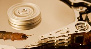 Worm on hard disk Royalty Free Stock Images