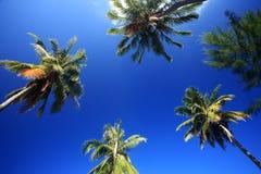 Worm la vue de l'arbre de noix de coco avec le ciel bleu à l'île de Samui, Thailan Photo libre de droits