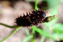 Worm larvae Stock Photos