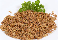 Worm meal Royalty Free Stock Photography