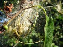 Worm in netto op boomtak, Litouwen stock fotografie