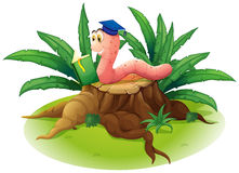 A worm reading at the top of a stump Royalty Free Stock Image