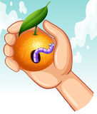 Worm in rotten orange. Illustration Stock Photography