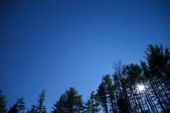 Worm's Eye View of Green Trees Under Blue Clear Night Sky stock image