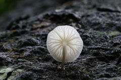 Worm's eye view of a luminous white mushroom Royalty Free Stock Photography