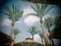 Palm trees and umbrellas with toy camera effect Royalty Free Stock Image