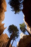 Worm's Eye View Photography of Trees and Rock Formation Royalty Free Stock Images