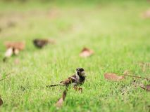 The Worm in The Sparrow Beak. Standing on The Grass Stock Images